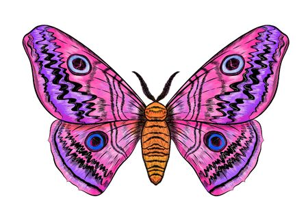purple pink blue butterfly with spots