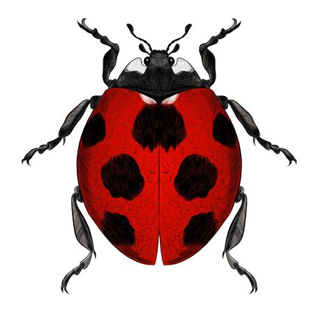 ladybug vector red with black spots realistic Illusztráció