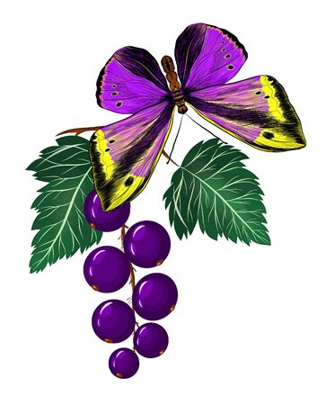 black currant and yellow purple butterfly