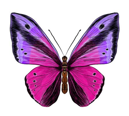 butterfly Papilio morpho purple pink