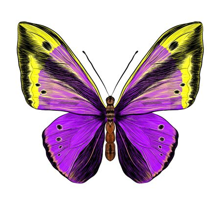 butterfly Papilio morpho purple yellow