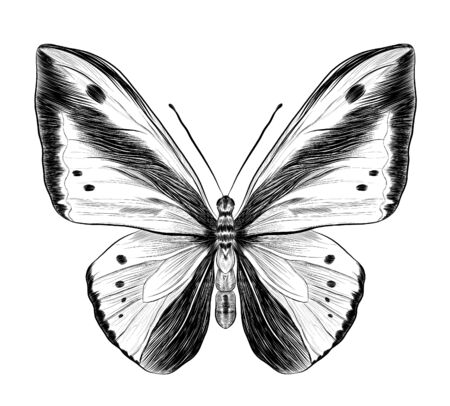 morpho butterfly black and white coloring