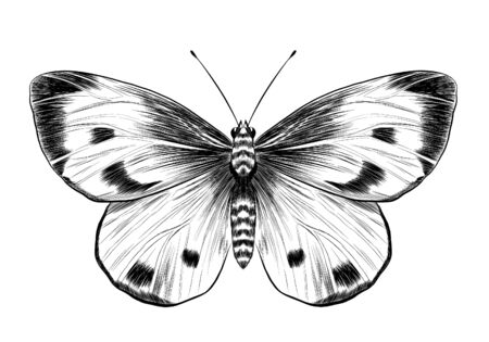 butterfly cabbage black and white vector Vektorgrafik