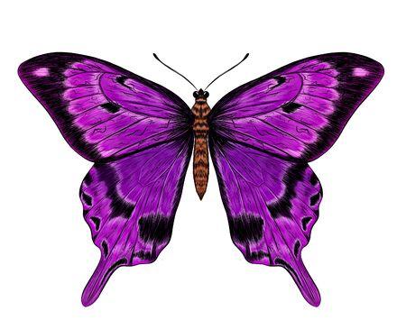 butterfly purple Morph fabulous beautiful