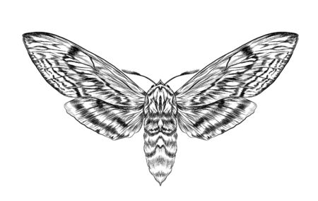 black and white furry moth coloring