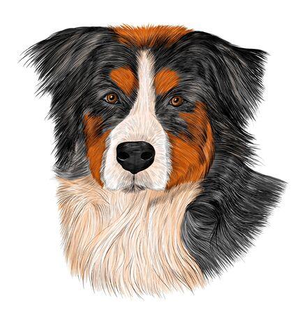 Bernese mountain dog brown white black