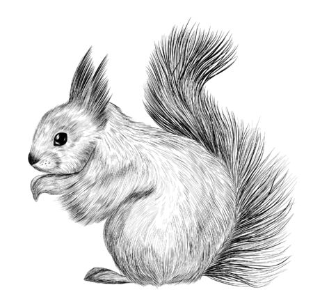 the sketch of the squirrel black and white coloring