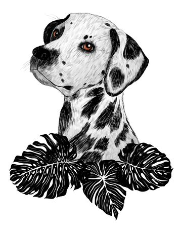 palm leaves and Dalmatian black and white