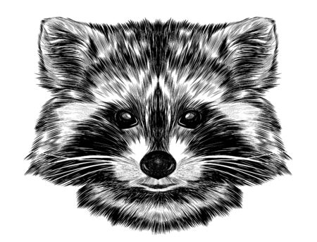 raccoon head small animal cute fluffy realistic black and white sketch Illustration