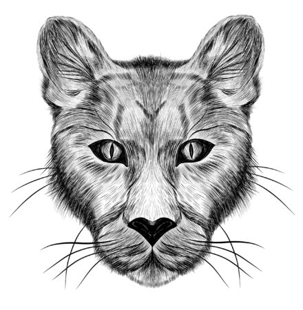 the head of a lioness animal sketch black and white Иллюстрация