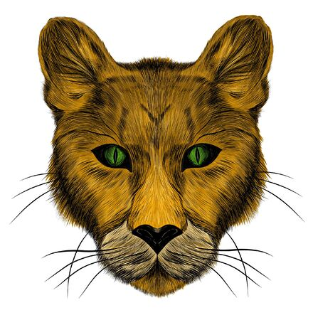 the head of a lioness animal brown green eyes