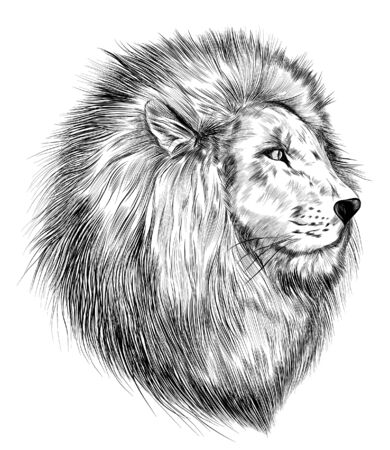 lion head sketch black and white