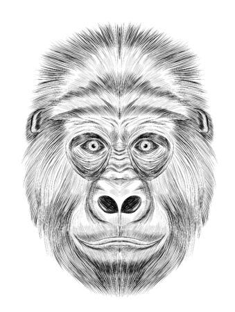 funny gorilla black and white sketch coloring book