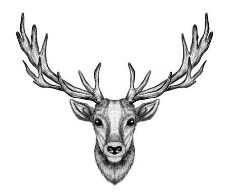 deer head with big horns sketch black and white Vector Illustratie