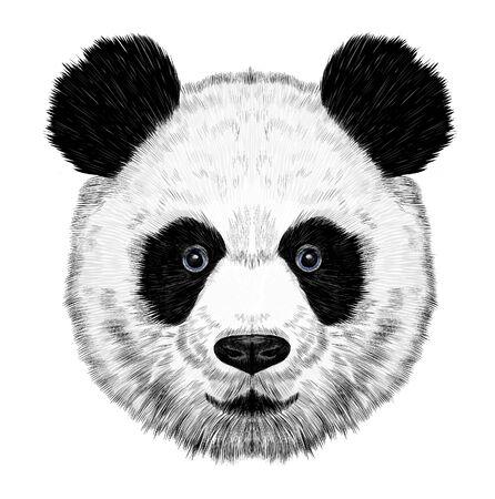 black and white Panda bear Asia Vector Illustratie