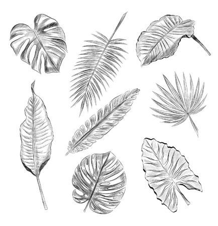 set of palm leaves black and white sketch Foto de archivo - 141133520