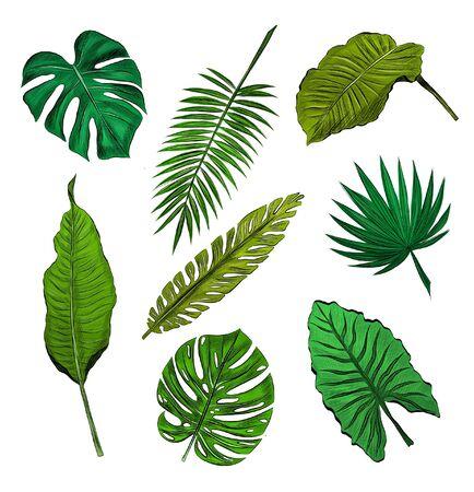 set of green palm leaves Vettoriali