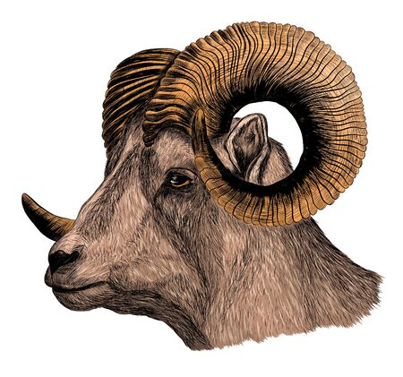 RAM with horns brown ungulate
