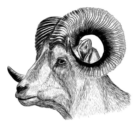 graphics RAM with horns black and white