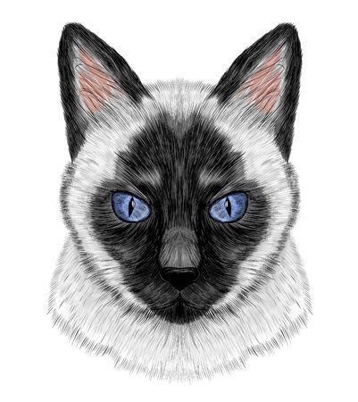 Chat siamois noir et blanc aux yeux bleus