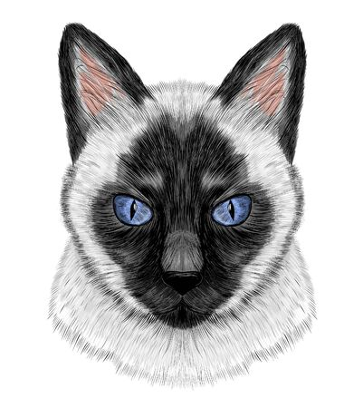 Siamese cat black and white with blue eyes