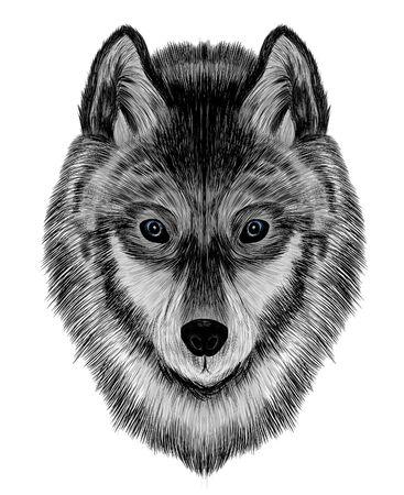 tête un loup gris les enfants sont un bon