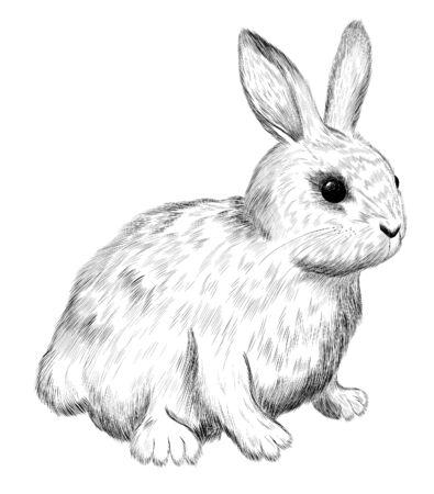cute white rabbit fluffy kids sketch