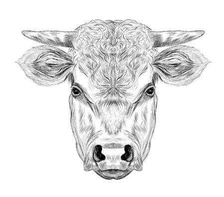 head horned cow cattle black and white sketch