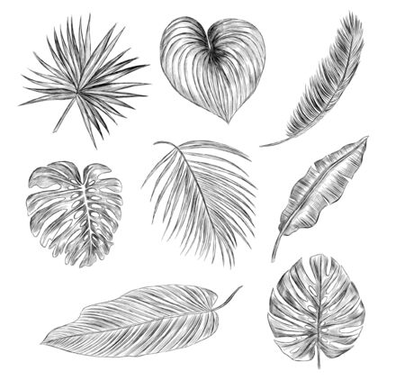 set of palm leaves black and white sketch Vectores