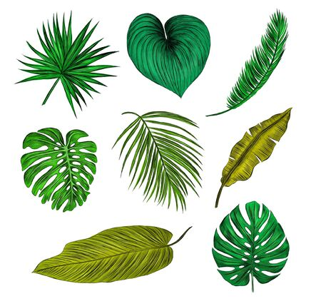 set of green palm leaves Vectores