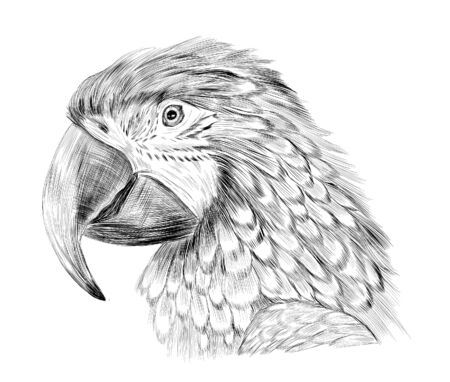 sketch bird parrot macaw stroke black and white