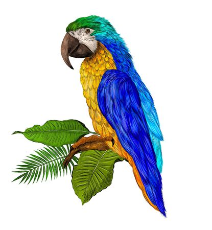 parrot macaw yellow green blue and palm leaves
