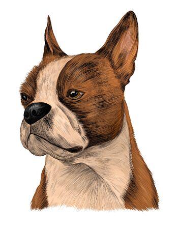 bulldog brown white portrait vector Vector Illustration