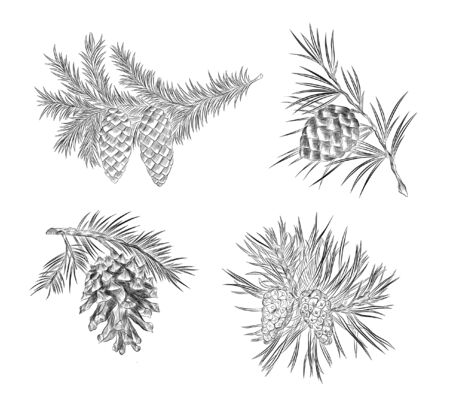 black and white sketch Christmas branch with cones in the new year Vettoriali