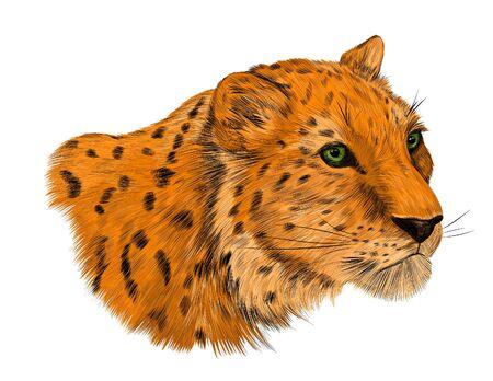 leopard animal of Africa with spots Vektorové ilustrace
