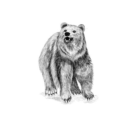 black and white bear cute funny Russia