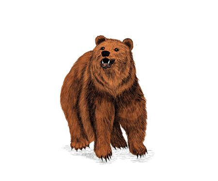 brown bear cute funny Russia