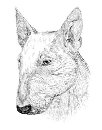 dog white English bull Terrier portrait sketch Illusztráció