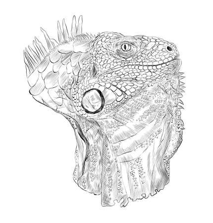 iguana head reptile coloring sketch black and white abstraction details barcode graphic vector illustration