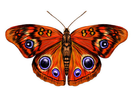 peacock eye fabulous barcode beautiful vector illustration red yellow orange butterfly