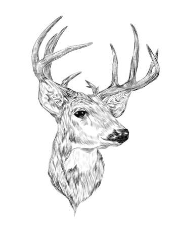 deer head with big horns black and white coloring sketch vector illustration print tattoo