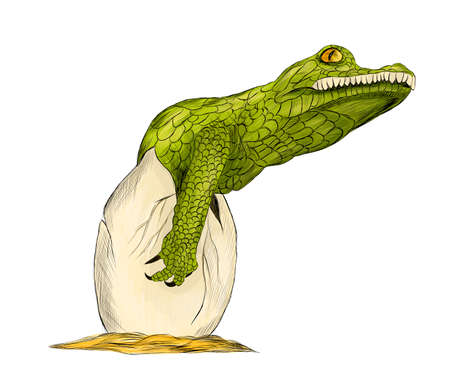 crocodile cub small green hatches from an egg graphic vector illustration reptile