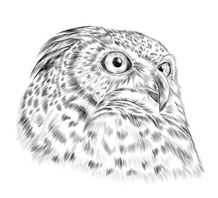 owl head smart realistic brown yellow eyes creative stroke vector illustration