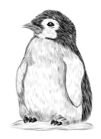 penguin little Antarctica North black and white vector illustration coloring book Ilustracja