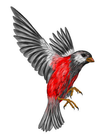 bullfinch gray bird with red feathers in flight vector illustration