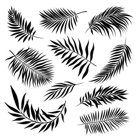 palm leaves set pattern black and white vector illustration