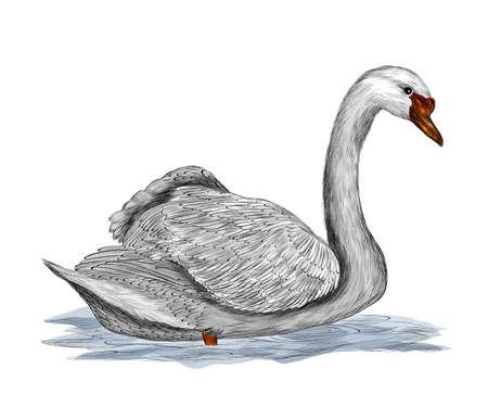 Swan bird with spread wings gray vector illustration