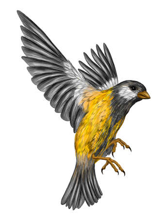 tit bird with yellow feathers in flight vector illustration