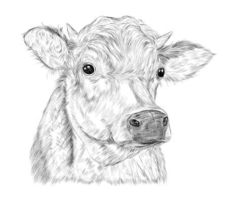 cow kind animal farm advertising milk vector black and white coloring sketch Ilustracja