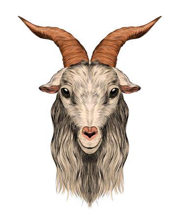 goat head portrait with horns profile bar graph symmetry vector illustration